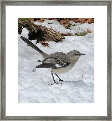 Mockingbird In The Snow Framed Print