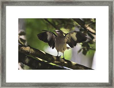 Mockingbird  Framed Print by Terry DeLuco
