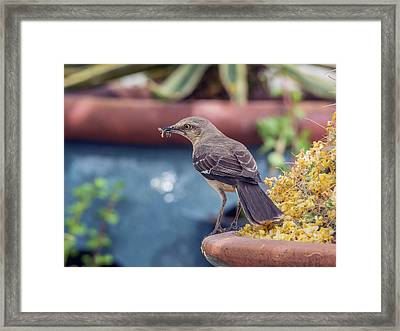 Mockingbird With Bee Framed Print by Tam Ryan