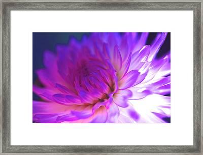Mod Dahlia Framed Print by Kathy Yates