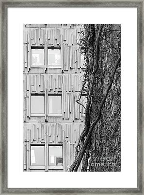 Modern And Nature Framed Print