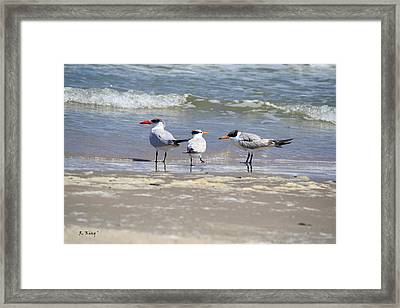 Moe And Larry And Curlie Framed Print