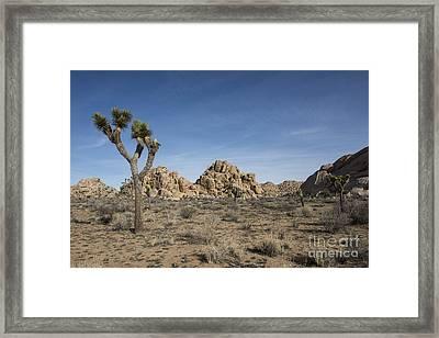 Mohave Desert Framed Print