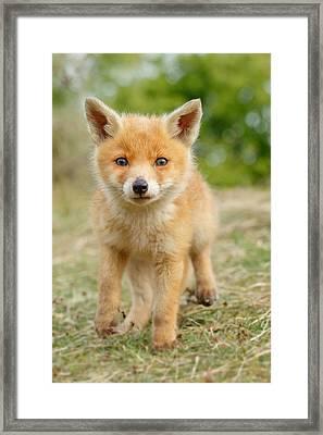Moi...? _fox Cub Framed Print by Roeselien Raimond