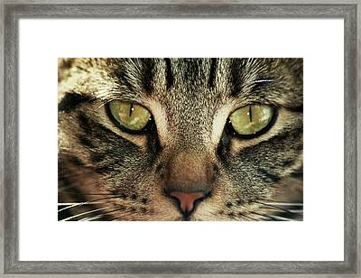 Moka Framed Print