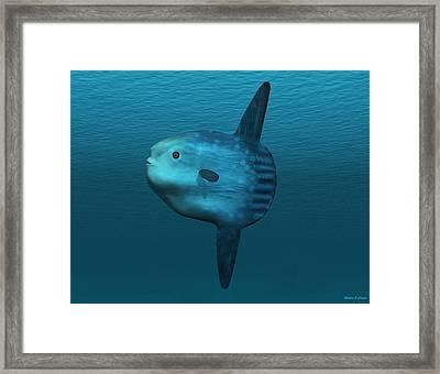 Mola Mola Ocean Sunfish Framed Print