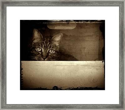 Mollie In A Box Framed Print by Patricia Strand