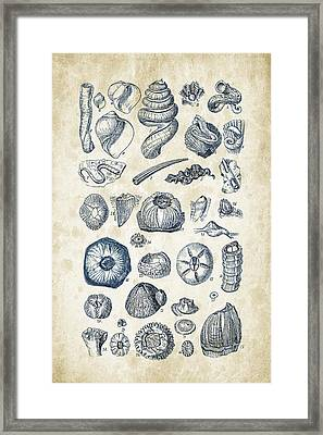 Mollusks - 1842 - 01 Framed Print