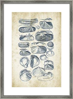 Mollusks - 1842 - 03 Framed Print by Aged Pixel