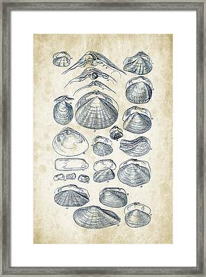 Mollusks - 1842 - 04 Framed Print by Aged Pixel
