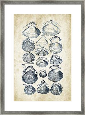 Mollusks - 1842 - 05 Framed Print