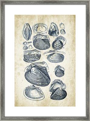 Mollusks - 1842 - 07 Framed Print by Aged Pixel