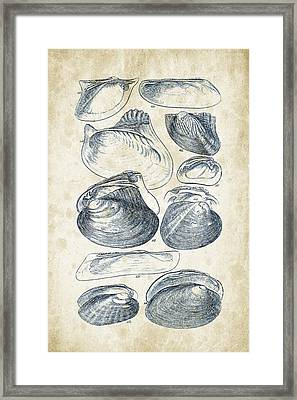 Mollusks - 1842 - 08 Framed Print by Aged Pixel