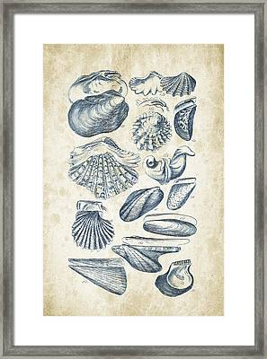 Mollusks - 1842 - 09 Framed Print by Aged Pixel