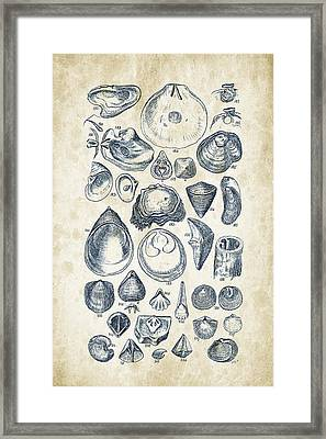 Mollusks - 1842 - 11 Framed Print by Aged Pixel