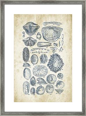 Mollusks - 1842 - 12 Framed Print by Aged Pixel