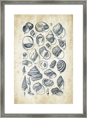 Mollusks - 1842 - 15 Framed Print by Aged Pixel