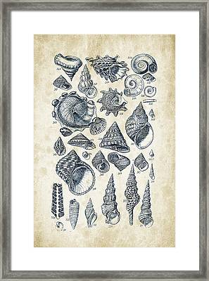 Mollusks - 1842 - 16 Framed Print by Aged Pixel