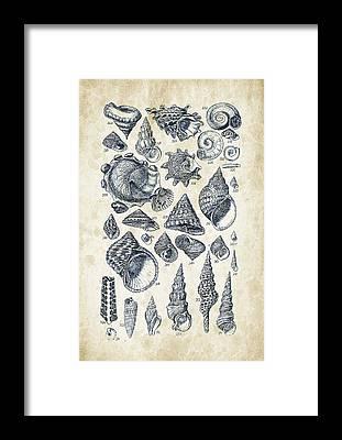 Mollusca Framed Prints