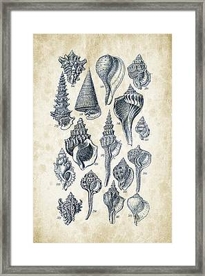 Mollusks - 1842 - 17 Framed Print