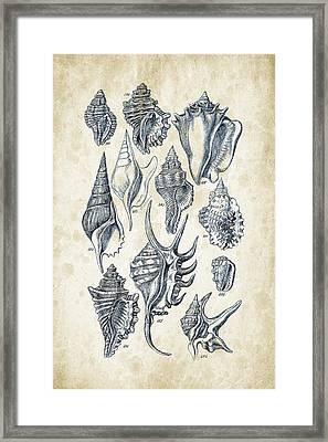 Mollusks - 1842 - 18 Framed Print by Aged Pixel