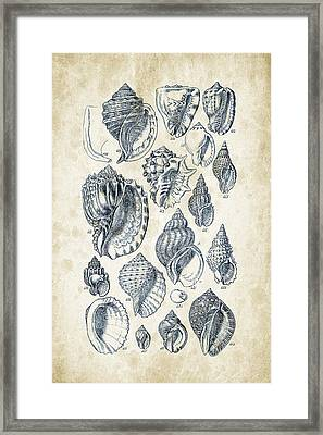 Mollusks - 1842 - 19 Framed Print by Aged Pixel