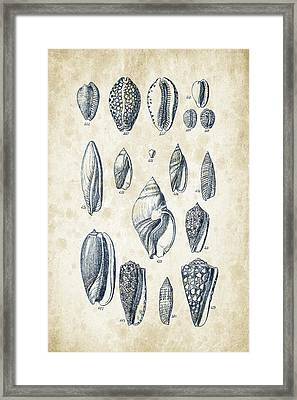 Mollusks - 1842 - 21 Framed Print by Aged Pixel