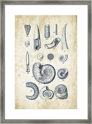 Mollusks - 1842 - 22 Framed Print