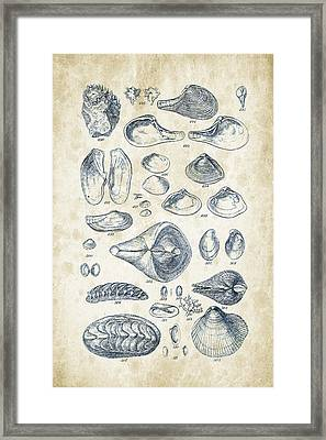Mollusks - 1842 - 24 Framed Print by Aged Pixel