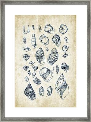 Mollusks - 1842 - 25 Framed Print