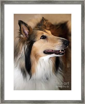 Molly Framed Print by Amanda Barcon