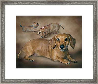 Molly Framed Print by Barbara Hymer