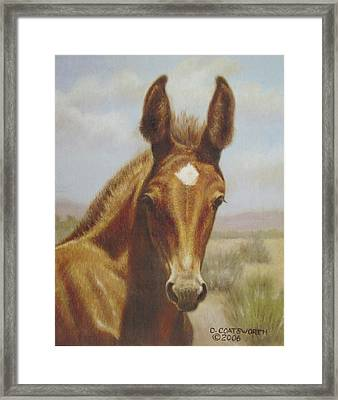 Molly Mule Foal Framed Print by Dorothy Coatsworth