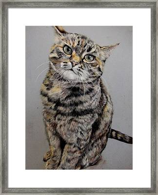 Molly Framed Print by Tanya Patey