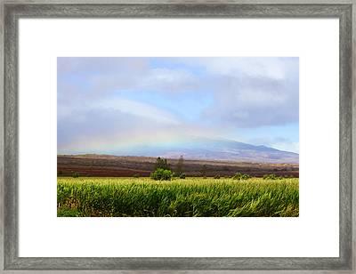 Molokai Cornfields  Framed Print