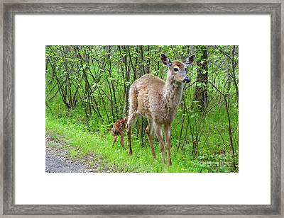 Mom And Babies Framed Print by Sandra Updyke