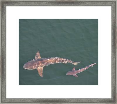 Mom And Baby Framed Print by Bill Perry