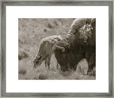 Mom And Baby Buffalo Framed Print by Rebecca Margraf