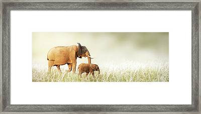 Mom And Baby Elephant Walking Through Tall Grass Framed Print by Susan Schmitz
