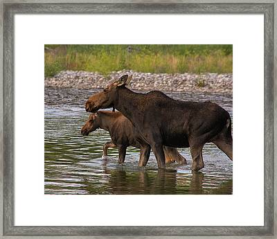 Framed Print featuring the photograph Mom And Baby Moose River Crossing by Mary Hone