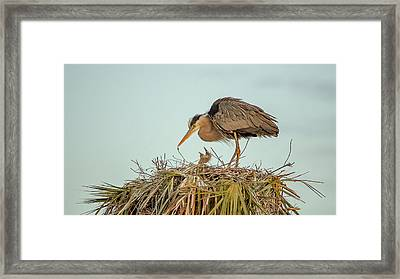 Mom And Chick Framed Print
