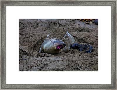 Mom And Pup Bonding Framed Print by Garry Gay