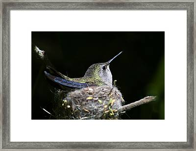 Mom Framed Print by Mike Herdering
