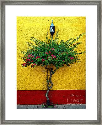 Moment Of Green Framed Print by Mexicolors Art Photography