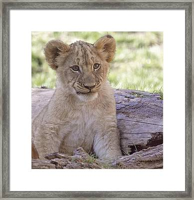 Moment Of Rest Framed Print