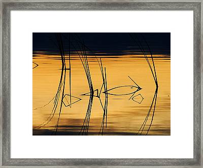 Framed Print featuring the photograph Momentary Reflection by Blair Wainman