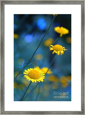 Momentum 04a Framed Print by Variance Collections