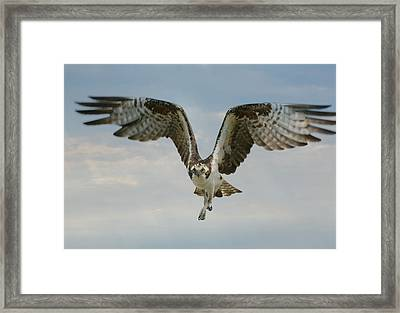 Framed Print featuring the photograph Momentum by Fraida Gutovich