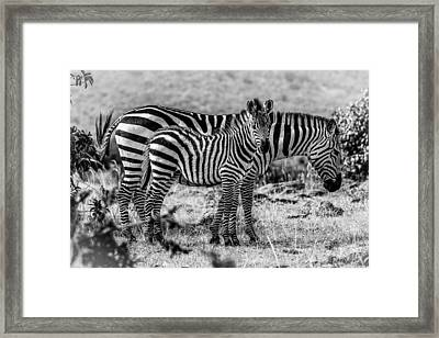 Momma And Her Baby Framed Print