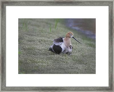 Mommy Love Framed Print